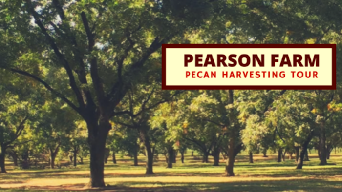 how-are-pecans-harvested